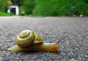 Snail-speed-Charlotte-Monroe-Mooresville-Criminal-Defense-Lawyer-300x207